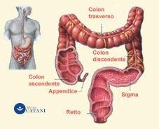 anatomia del colon